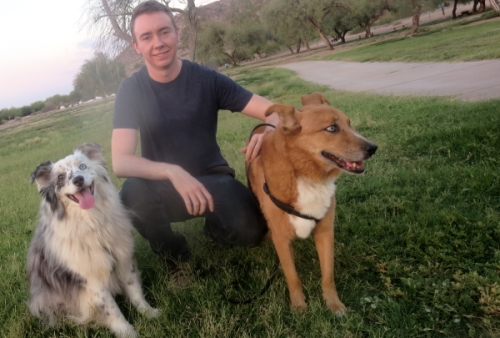 3 lost dogs
