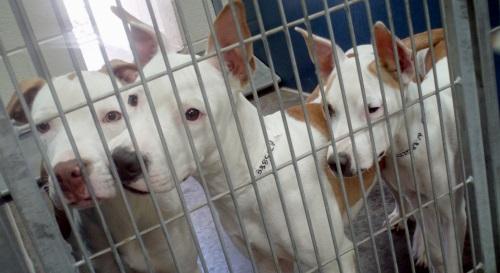 Three Lost Dogs