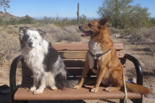 Image Led Teach Your Dog Basic Commands Step 18