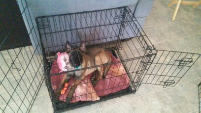 Dog Crates: the Good, the Bad, and the Ugly | 3 Lost Dogs