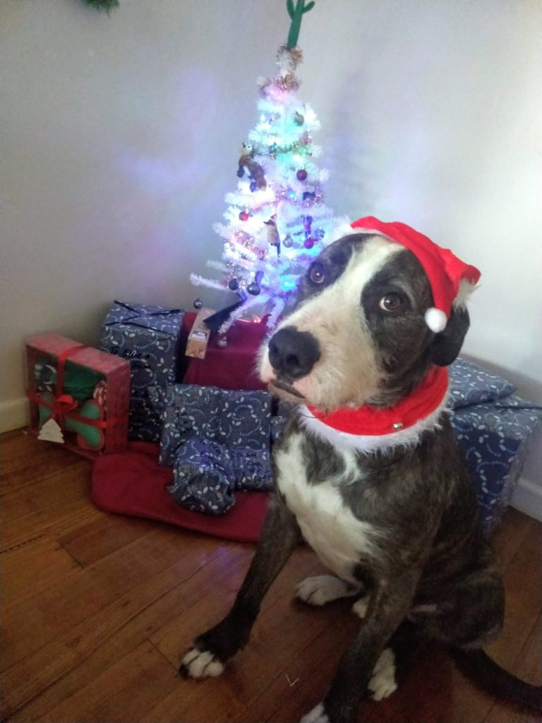 How to Get a Christmas Puppy