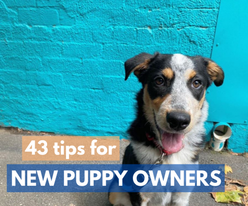 43 tips for new puppy owners